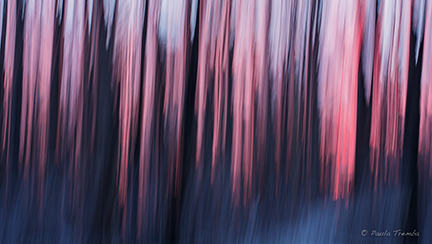 Winter Dream (Intentional Camera Movement)